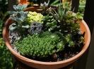Plant Succulent Clay Pot Succulent Garden Garden